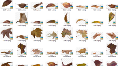 Photo of 50 PNG Leaf Overlays free download