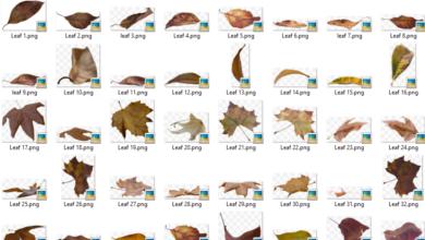 50 PNG Leaf Overlays Picgiraffe.com 489