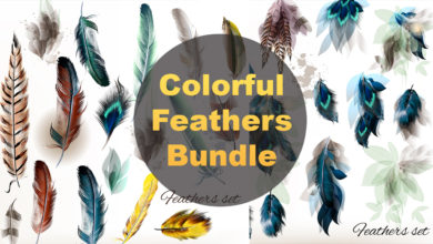 Photo of Colorful feathers bundle Free Download